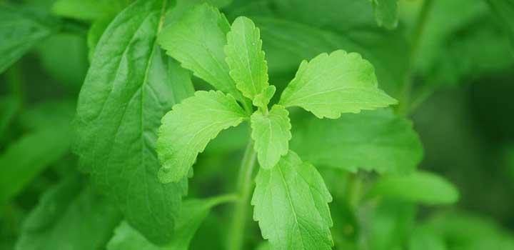 Stevia é um bom adoçante natural