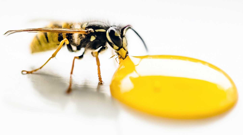 Uma abelha tomando mel