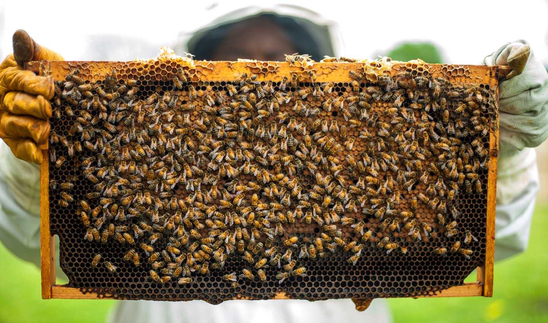 Um apicultor local orgulhosamente produzindo mel de qualidade  - Photo by Timothy Paule II from Pexels