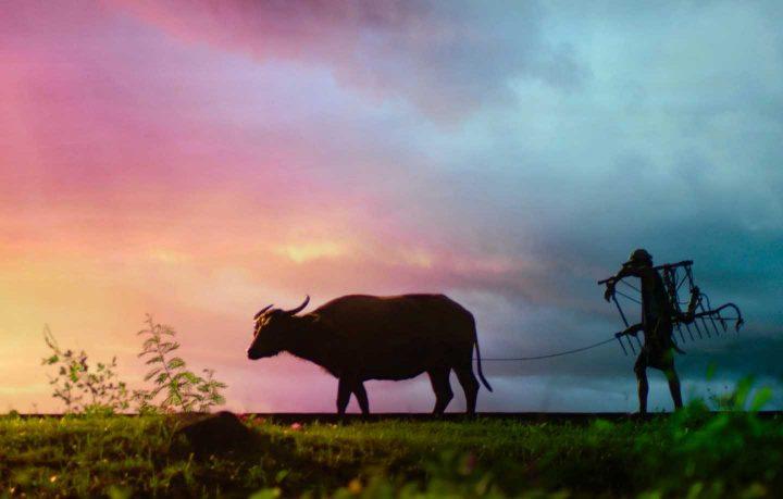 Um fazendeira tradicional depois de arar o campo - Photo by Archie Binamira from Pexels