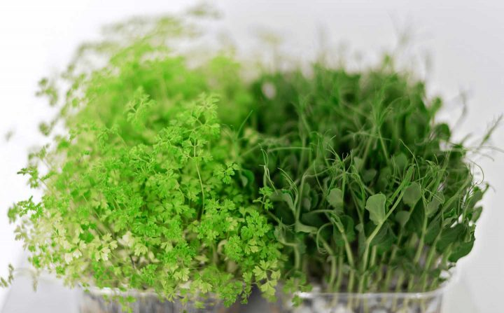 Microgreens - Photo by Mikhail Nilov from Pexels